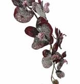 Orchidee/ Phalaenopsis vereist 6 Blueten 3 Knospen 75cm