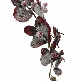 Phalaenopsis x6, iced, 3buds, 75cm