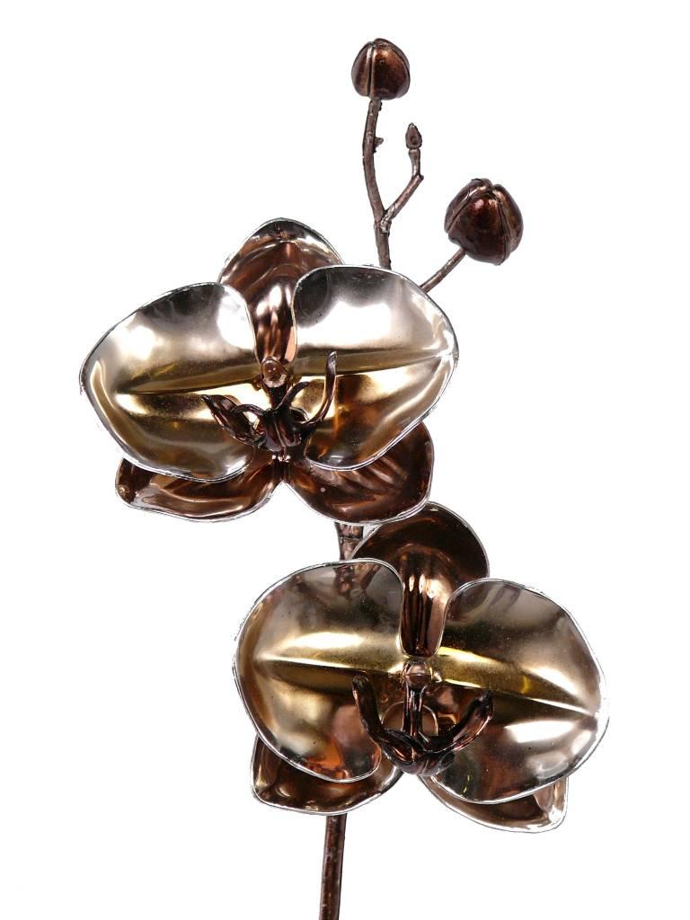 Phalaenopsis x2fls elite, 2buds, metallic, coated stem, 50cm - SUPER DEAL