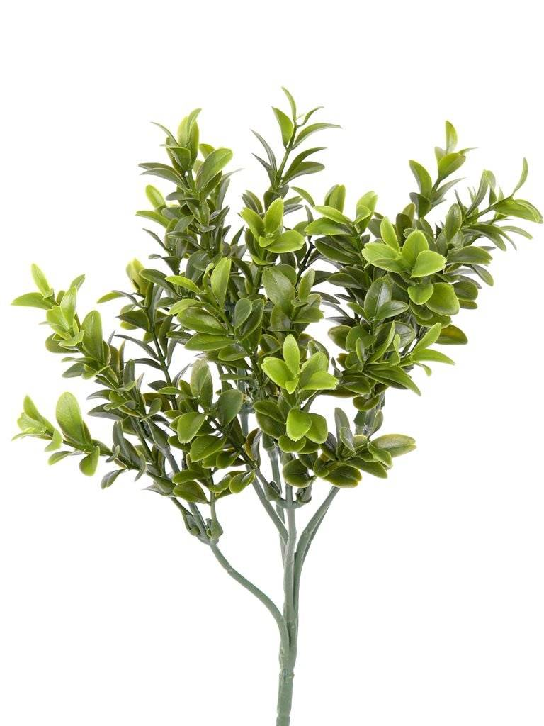 Boxwood-twig x36 tips of leaves 47cm, FIRE RETARDENT