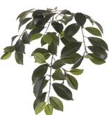 "Ficus Microcarpa ""Retusa"" Blattzweig,  60 Blätter, 65cm"