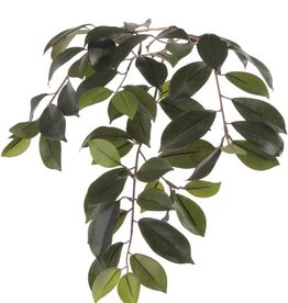 "Ficus microcarpa ""Retusa"", 60 hojas, 65cm"