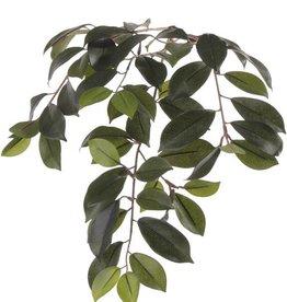 "Ficus Microcarpa ""Retusa"" Blattzweig, x60Blt, 65cm"