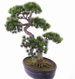 Japanese Pine Bonsai x318 40cm