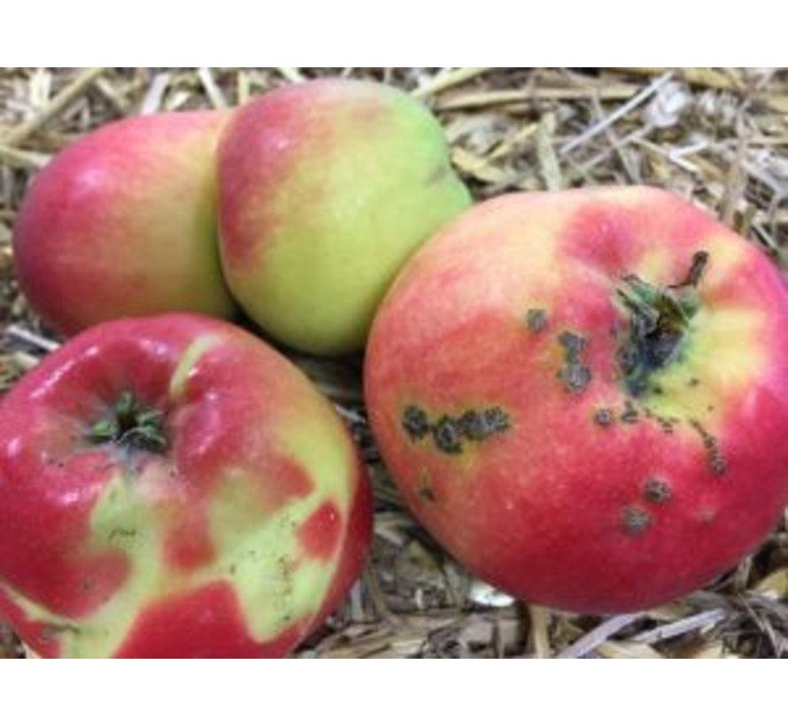 Krenkelaar Appelsprankel