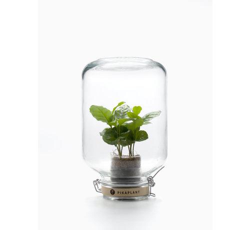 Pikaplant Kamerplant met eigen ecosysteem