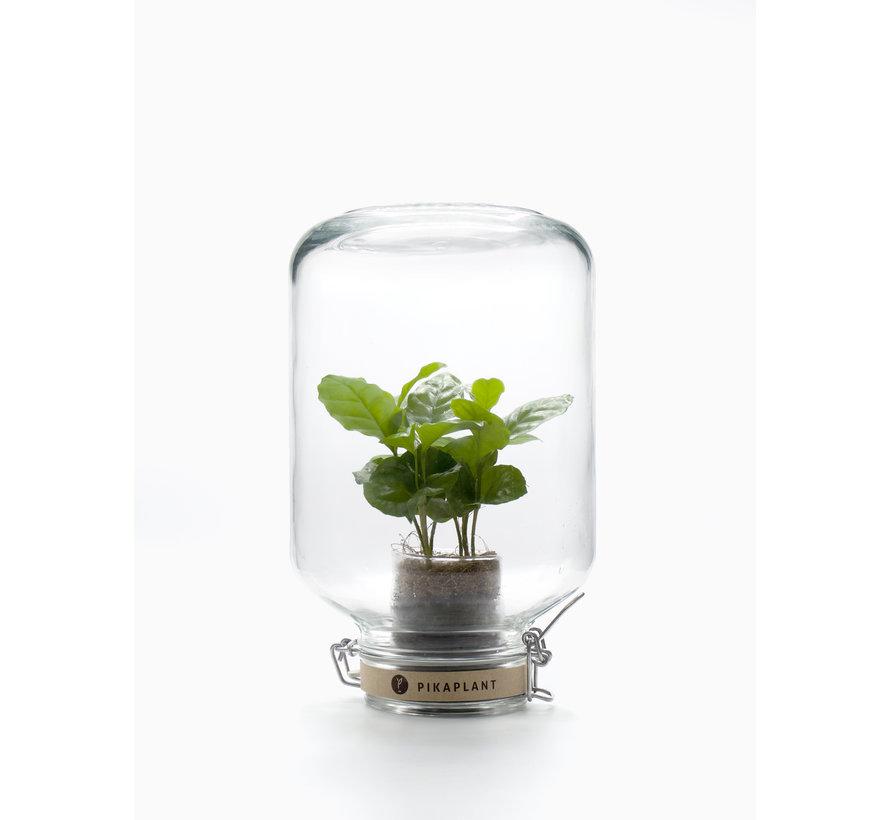 Kamerplant met eigen ecosysteem