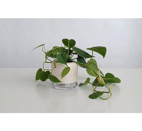 Pikaplant Plantenpot met ingebouwde waterreservoir + Plant