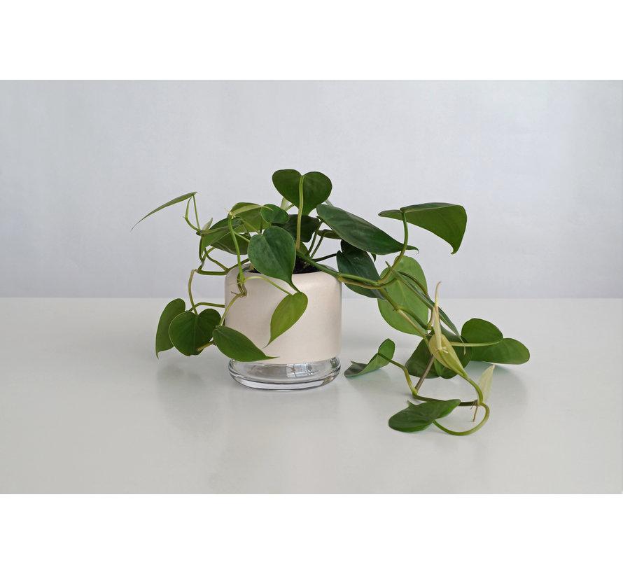 Plantenpot met ingebouwde waterreservoir + Plant