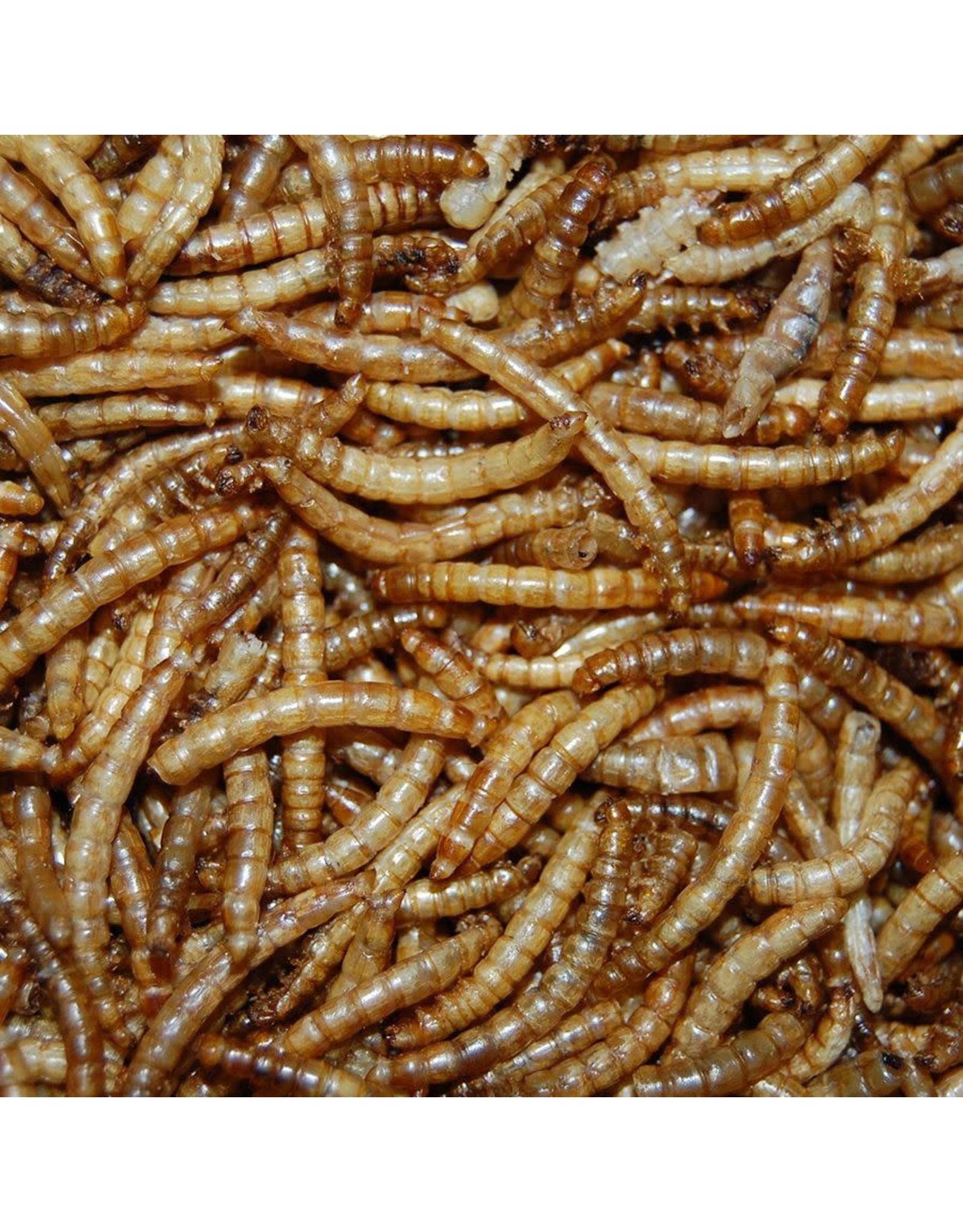 Meelwormen voor buitenvogels 2,5 liter