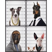 Most Wanted  Hunde - Deco Panel 40 x 50 cm