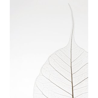 Poster Blatt Filigran - Naturmotiv - Stylisch - Nahaufnahme