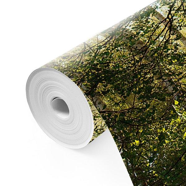Sonnestrahlen im Birkenwald Wald - Natur - Stille - Sonnenaufgang  - Fototapete Vlies 384 x 260 cm