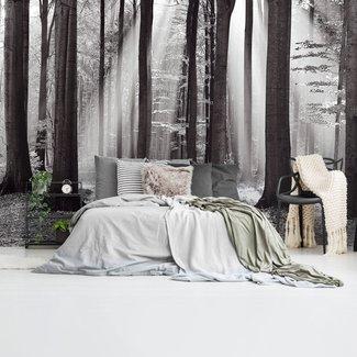 Fototapete Weißer Wald Herbst - Sonnestrahlen - Frieden