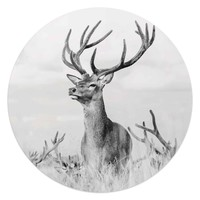 Stolzer Hirsch Tiermotiv - Hirschgeweih - Natur - Glasbild Round Art Glas