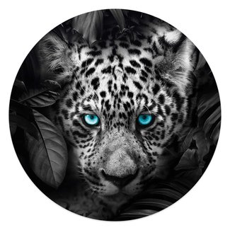 Glasbild Leopard