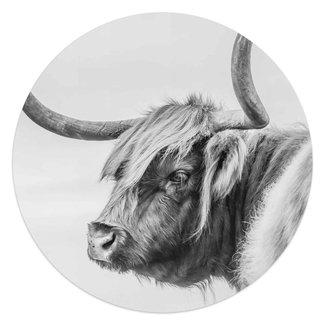 Glasbild Hochländer Kuh