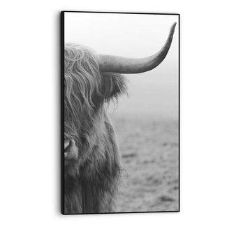 Gerahmtes Bild Highlander Bulle - Schottischer - Nahaufnahme