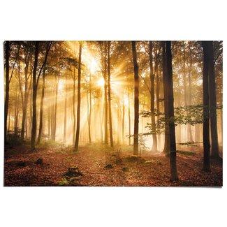 Poster Erleuchteter Wald