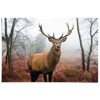 Poster Hirsch im Wald