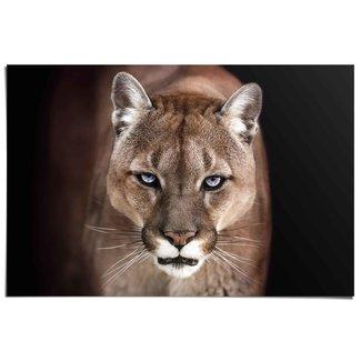 Poster Puma