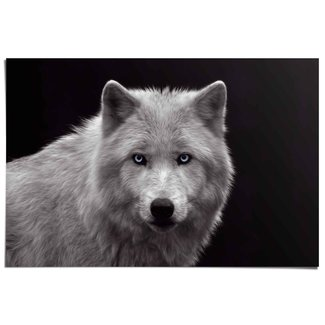 Poster Weißer Wolf