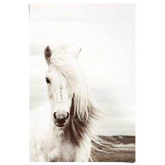 Poster Weißes Pferd