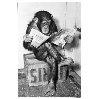 Poster Chimp Zeitung