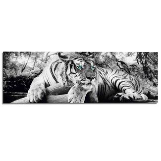 Wandbild Tigerblick