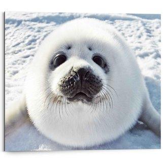 Wandbild Seehund Junge