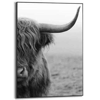 Gerahmtes Bild Schottisches Hochlandrind