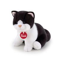 Kitten Brad