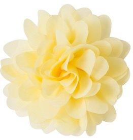 Voile bloem, lichtgeel