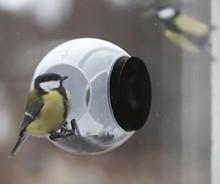 Birdfeeder kopen? Birdfeeder (voorzien van een handige zuignap voor bevestiging op het raam)