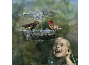 The Observer brings birds directly from your window!