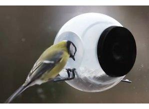 Birdfeeder kopen? Birdfeeder! Bij ons kunt u een birdfeeder kopen voor buiten vogels. Vogels in NeaBirdfeeder kopen? Bij ons kunt u een birdfeeder kopen voor buiten vogels. De Birdfeeder kan met de zuignap op ieder raam bevestigd worden. Met de handige zu