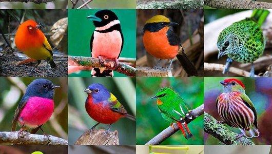 Vogels - Vogels - Vogeltjes