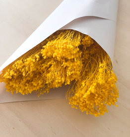 Broom bloom geel