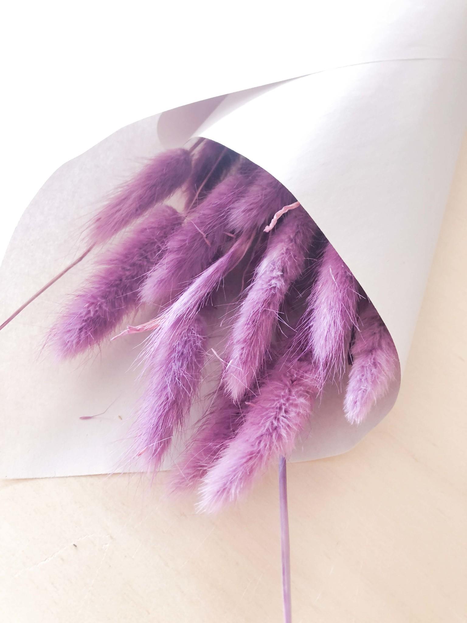 Lagurus paars