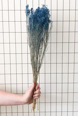 Broom bloom blauw