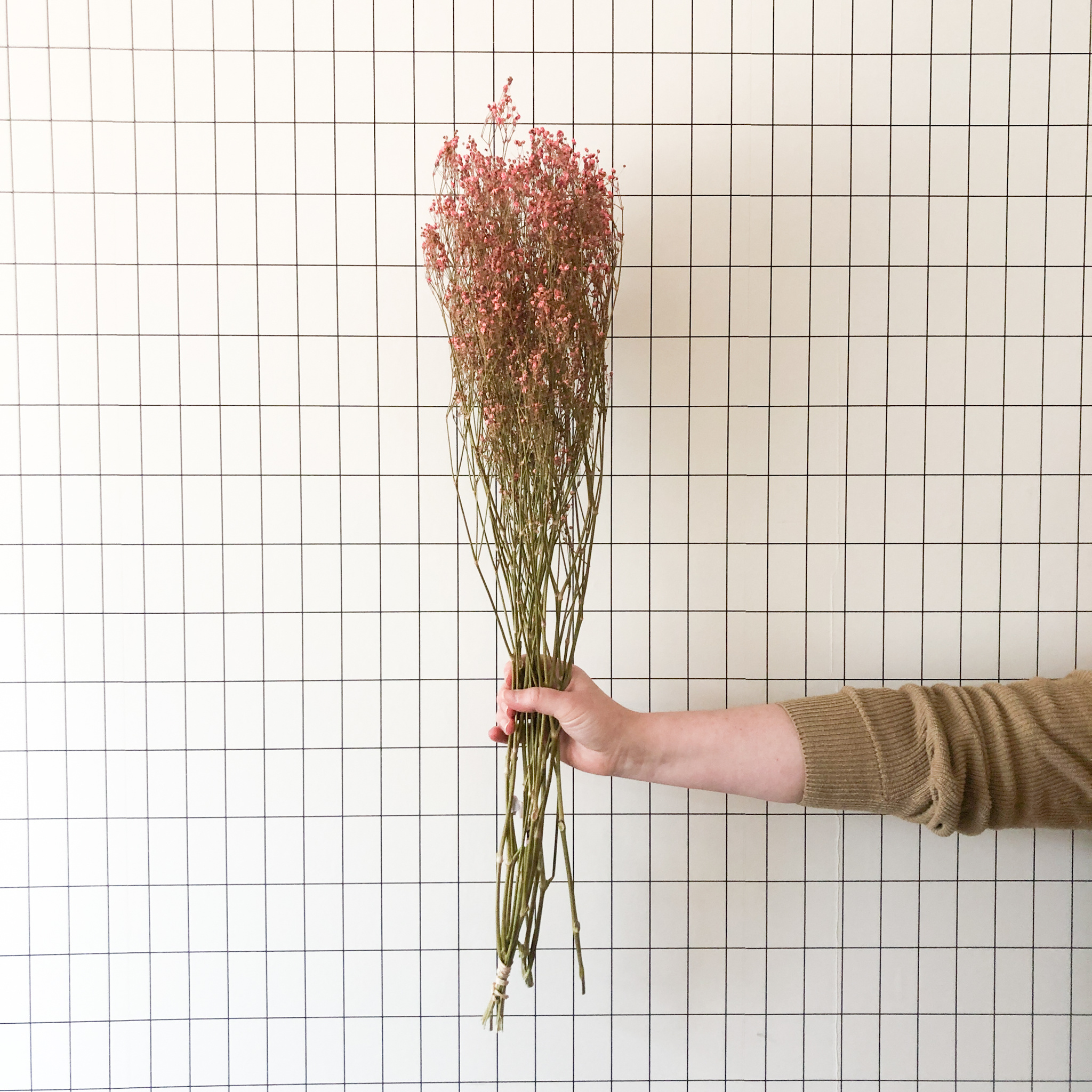 Gipskruid roos