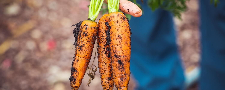 Waarom biologisch eten? 4 voordelen