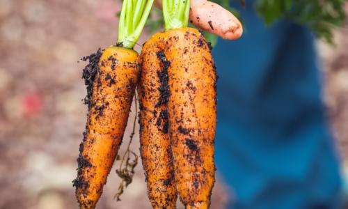 Warum biologisches Essen? 4 Vorteile