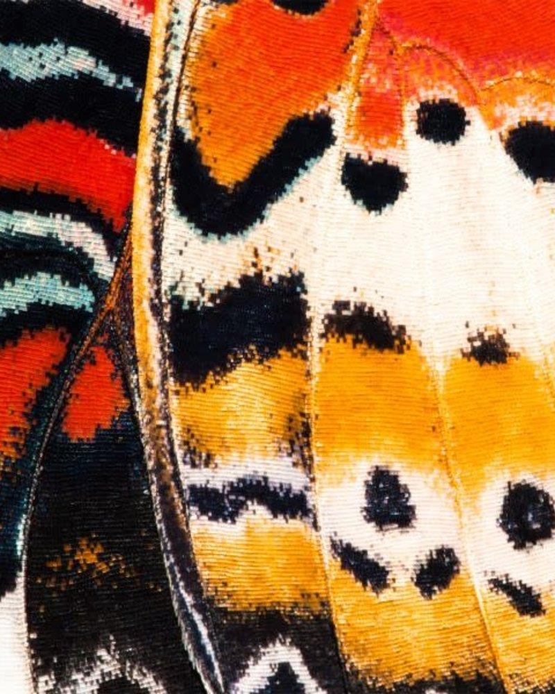 Sock My Feet Sock my butterfly