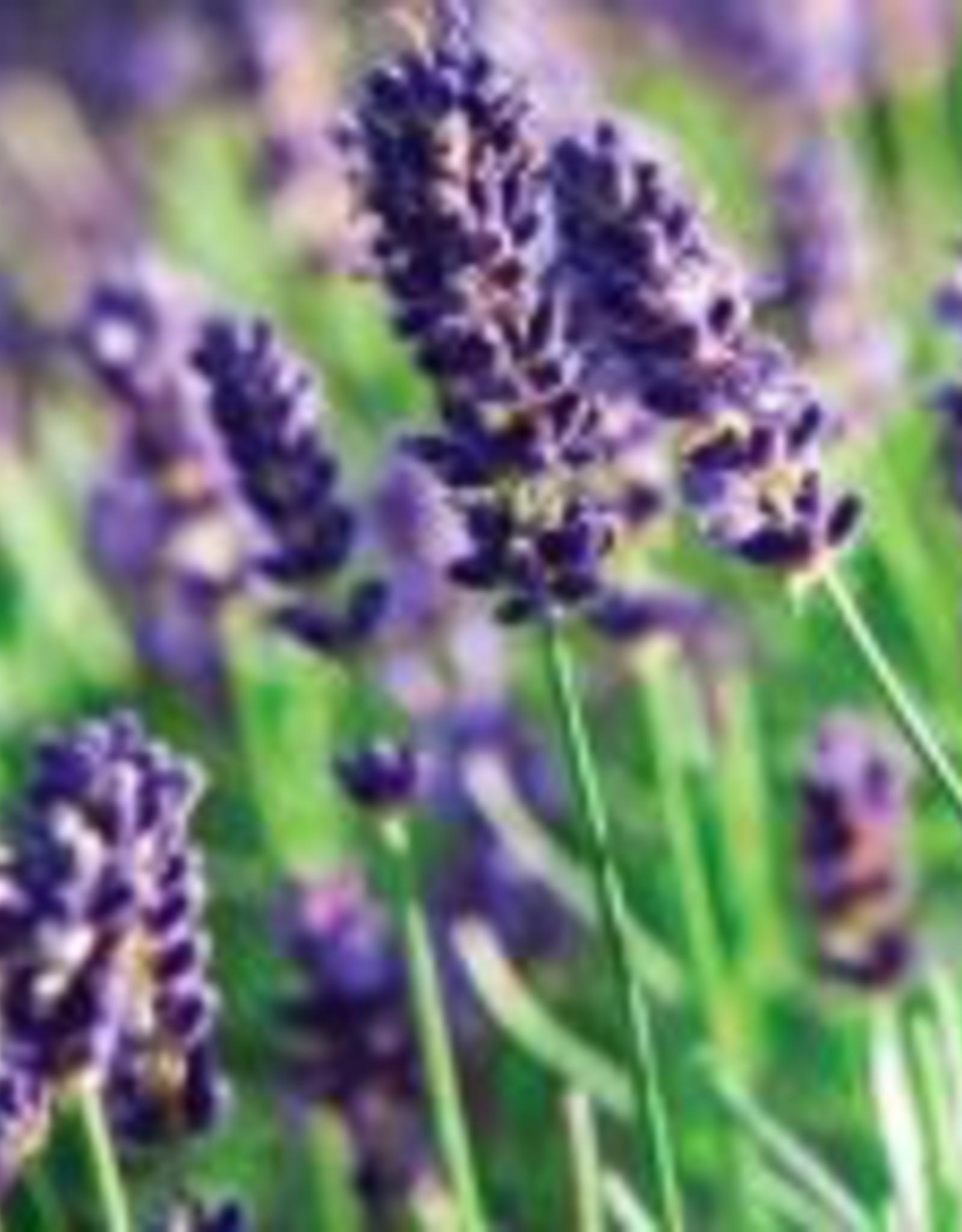 Utsukusy Lavendel hydrolaat toner lotion