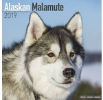 Alaskan Malamute Kalenders 2020