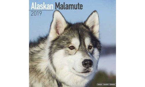 Alaskan Malamute Kalenders 2019
