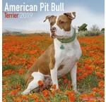 American Pit Bull Terrier Kalenders 2020