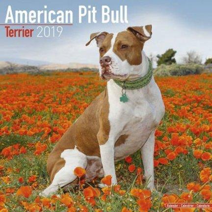 American Pit Bull Terrier Kalenders 2019