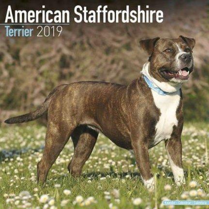 Amerikaanse Staffordshire Terrier Kalenders 2019